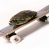 turtleskate