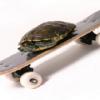 turtleskate