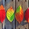 adkar_leaves